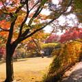 181128_01_庭園の様子・S18200・α60(殿ヶ谷庭園) (290)