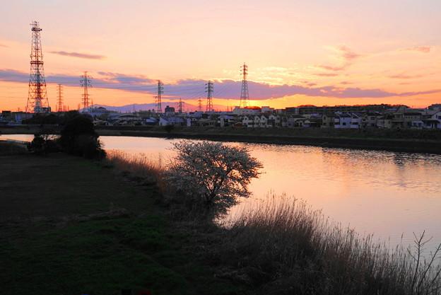 190324_69Y_夕景と桜・S18200(鶴見川) (2)