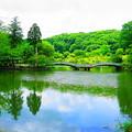 190614_11K_公園の様子・S18200(薬師池) (1)