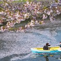 写真: 花筏