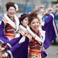 Photos: 2019 YOSAKOIソーラン祭り 道南大会