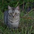 写真: 愛猫3