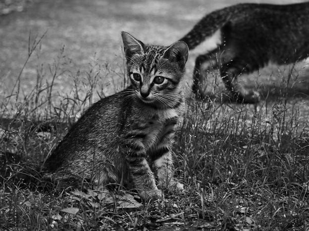写真: 庭の仔猫