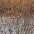 尾の長い鳥 (2)