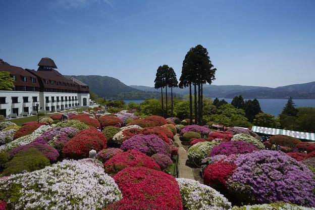 ホテルのツツジ庭園と芦ノ湖