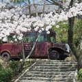 お花見バス
