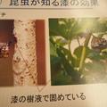 Photos: P4180767