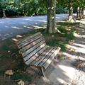 プラタナス並木のベンチ