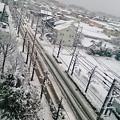 写真: 今朝の雪