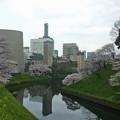 Photos: 千鳥ヶ淵の桜