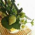 Photos: 苺の花