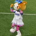写真: 横浜スタジアム