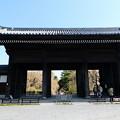 Photos: 東郷寺の枝垂れ桜