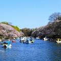Photos: 井の頭公園の池