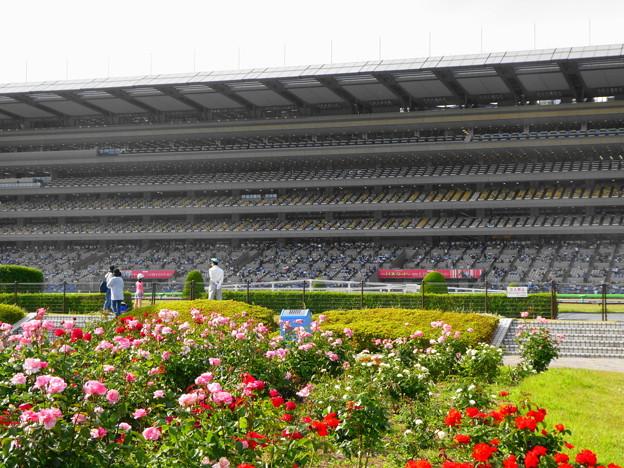 写真: 東京競馬場