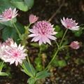 写真: 東京競馬場の花壇の花