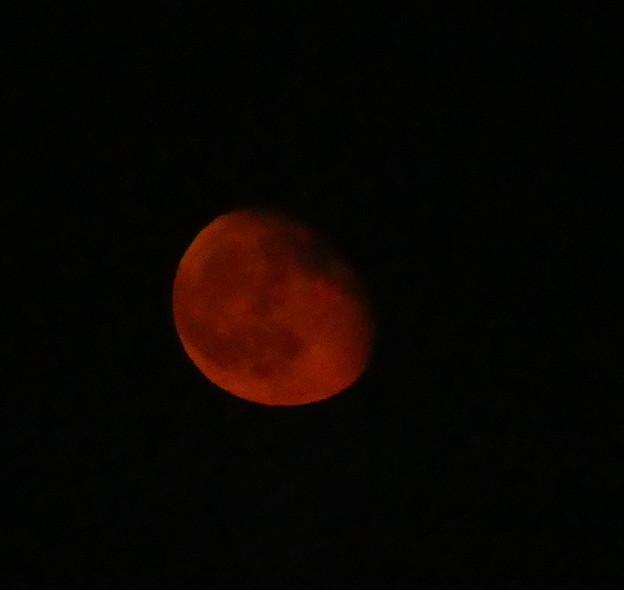 Photos: さっき月