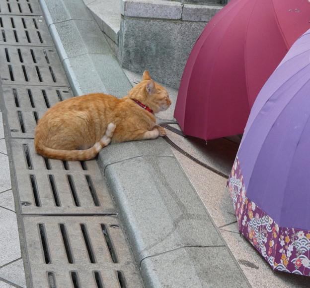 Photos: 居眠りにゃんこ