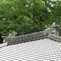 明月院の本堂の屋根