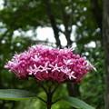 写真: 牡丹草木