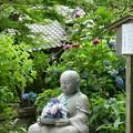 Photos: 牡丹草木