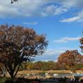 写真: 秋の休日