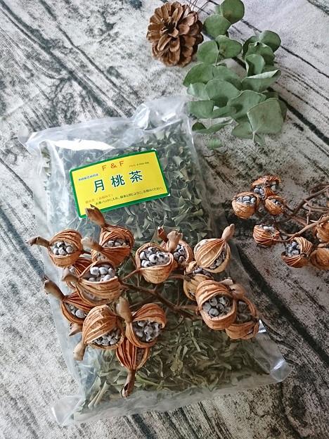 月桃茶と月桃の種