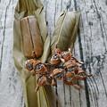 Photos: 月桃の葉とカーサムーチーと月桃の種