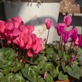 ベランダの花も