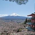 Photos: 富士山と桜と五重塔(忠霊塔)
