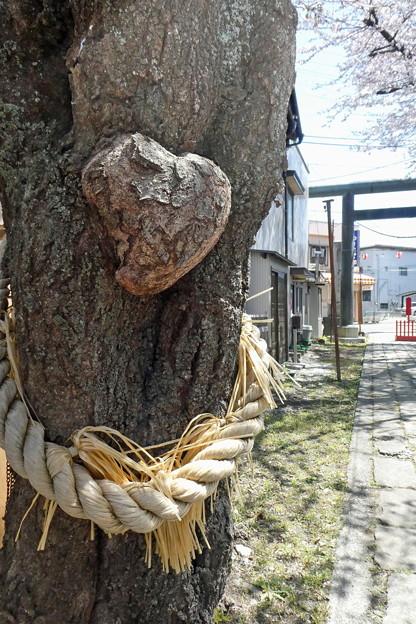 ハート形御神木