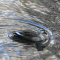 Photos: 水のアートの中で優雅に