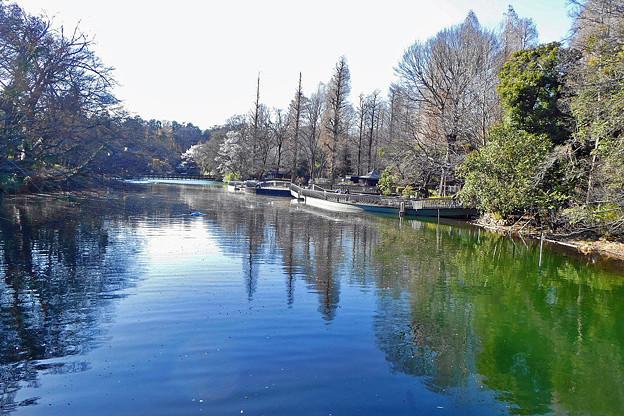 池に映る緑