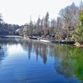 Photos: 池に映る緑