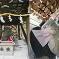 Photos: 天空の杜 神戸北野天満神社