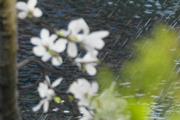 Photos: 水しぶき