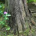 大きな木の根に