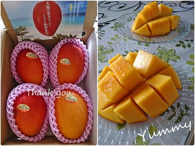 沖縄本島のマンゴー