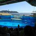 Photos: 新江ノ島水族館