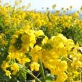 Photos: Yellow paper
