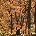 猿の紅葉狩り