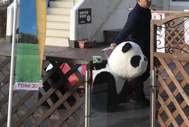 パンダの店じまい