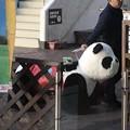 写真: パンダの店じまい