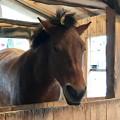 Photos: 木曽馬の結似