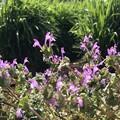 写真: 春のスウィング♪