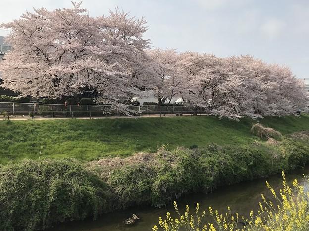武蔵野の春