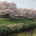 Photos: 武蔵野の春