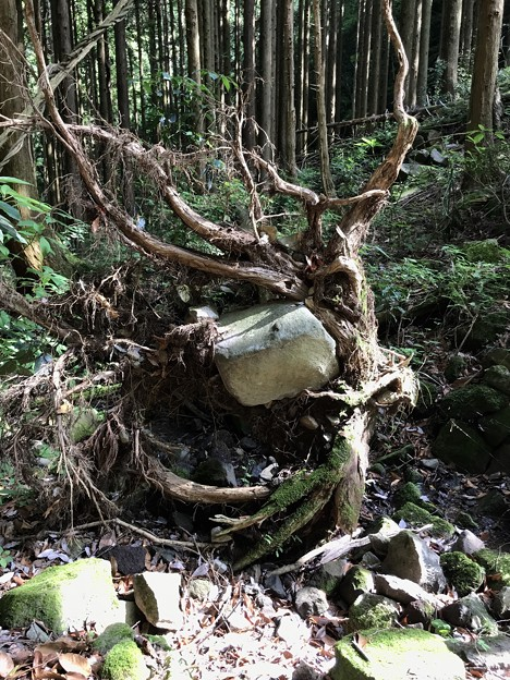森の不思議
