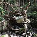 Photos: 森の不思議