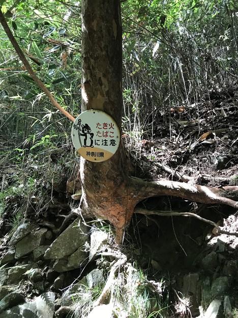 森の熊さん